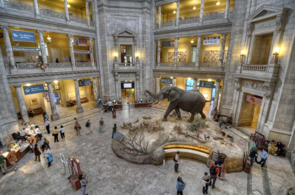 Natural History Museum HDR 03 (3 Pix)