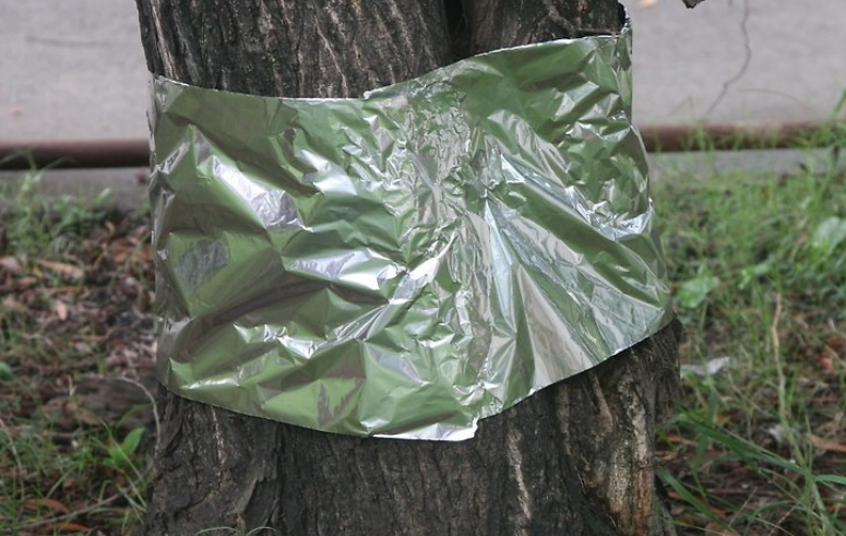 Tree Trunks 13