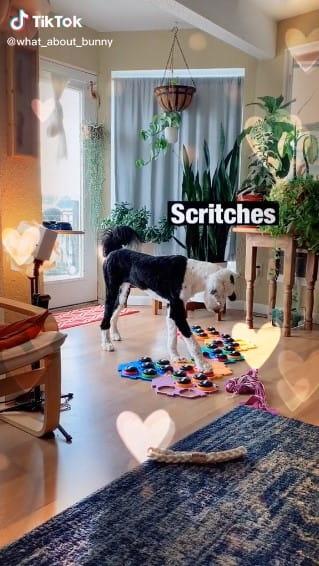 Scritches